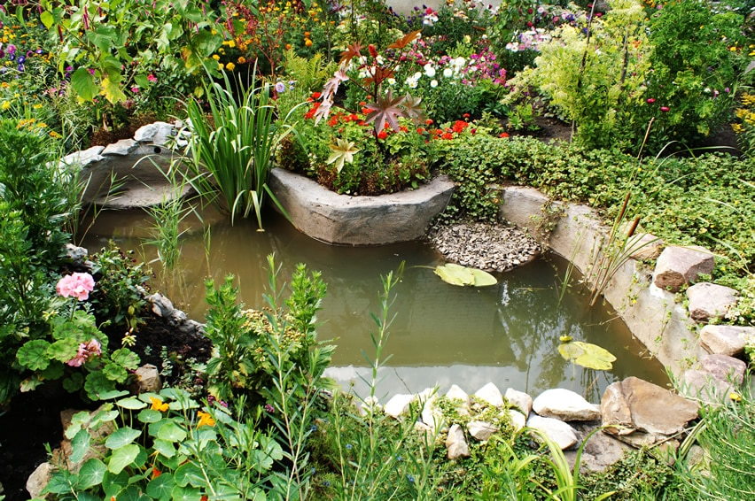 Garden pond in backyard with flowers