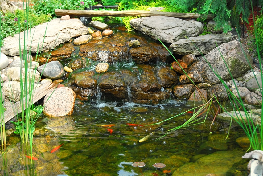 Natural backyard pond with waterfall
