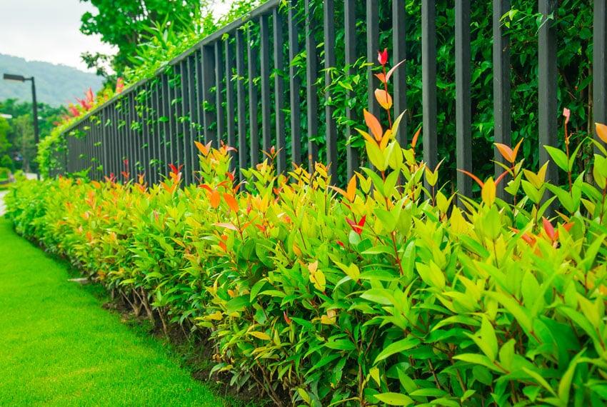 Green aluminum fence