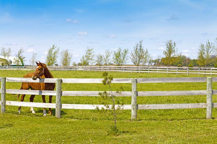 Wood horse fence