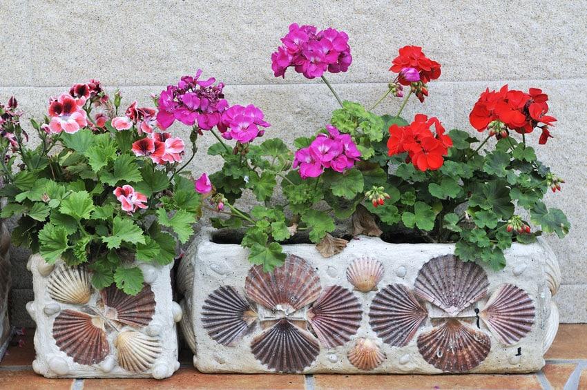Artistic seashell flower box planter