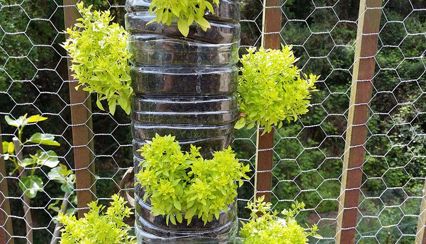 DIY vertical garden from plastic bottles and chicken wire fence