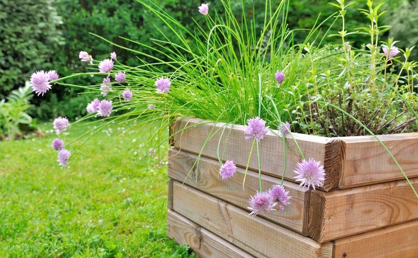 DIY wood flower box in backyard with aromatic plants
