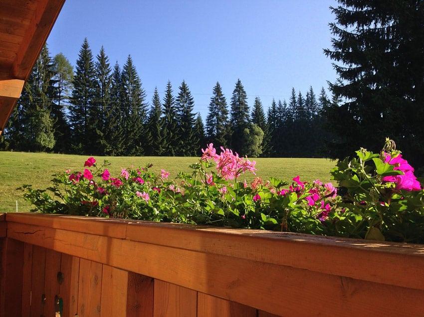 Flower boxes along wood deck railing