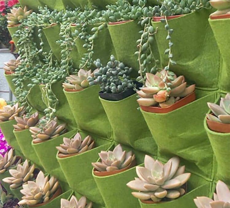 Hanging planter with succulent plants