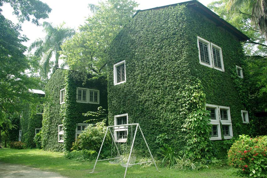 House with organic plant walls