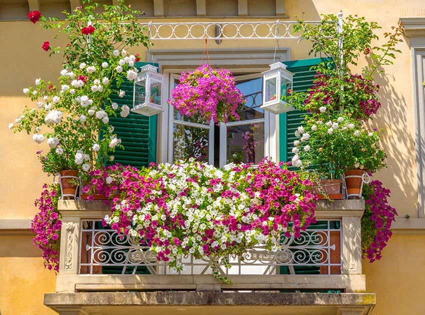 Italian house balcony with flower planters