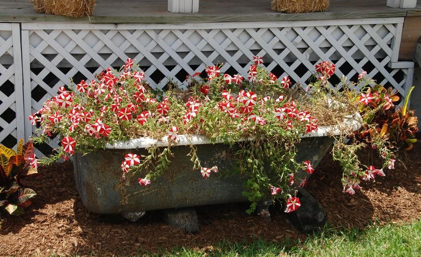 Old bathtub flower box planter