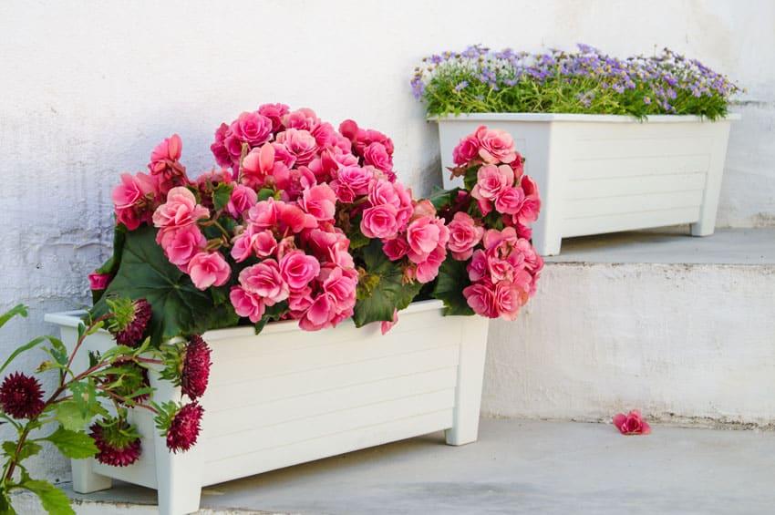 White flower planter boxes on patio