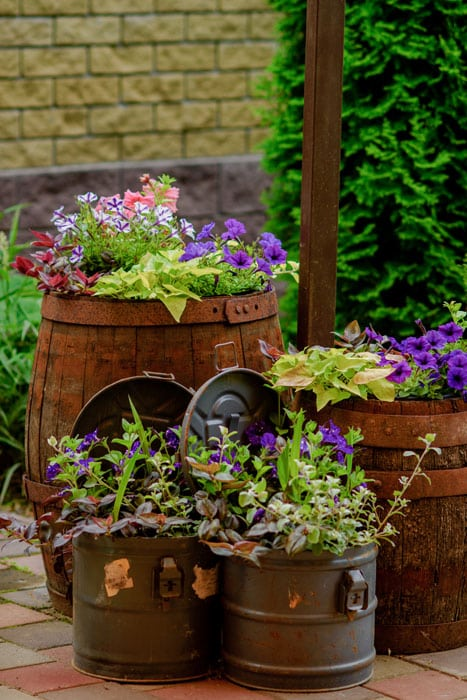 Blossoming flowerbeds in barrels and boxes