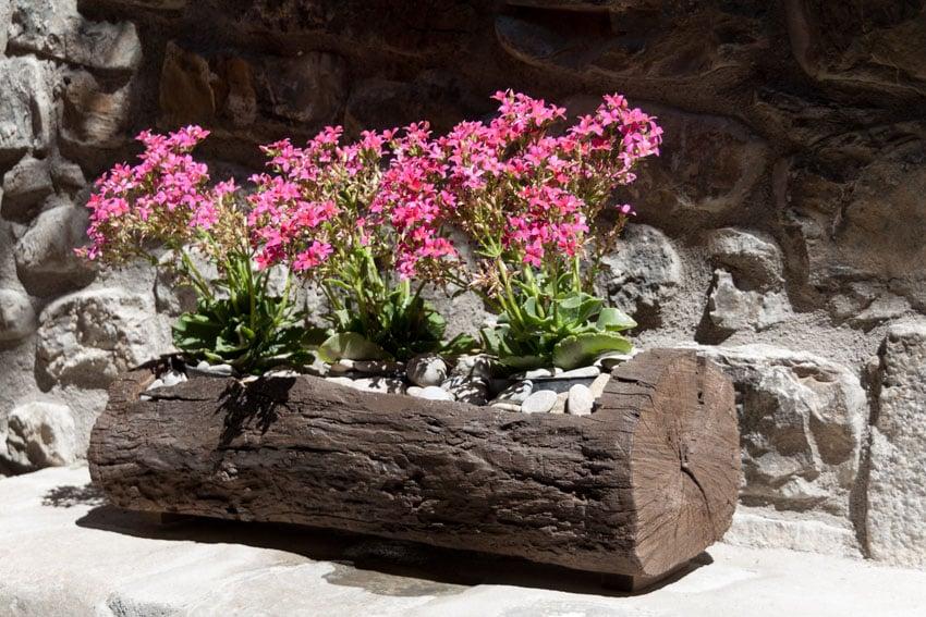 Rustic wood log flower box