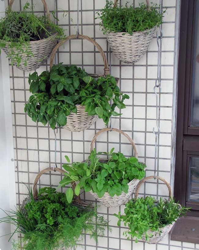 Starting a vertical garden with hanging plants
