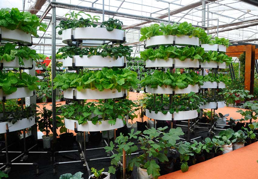 Vertical garden in greenhouse with round planters