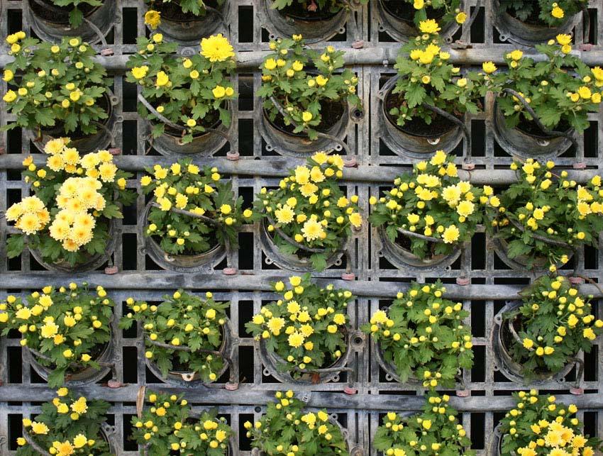 Vertical garden with flowering plants