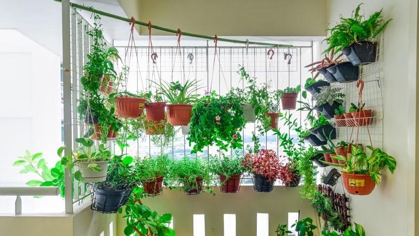 vertical-hanging-garden-on-apartment-balcony