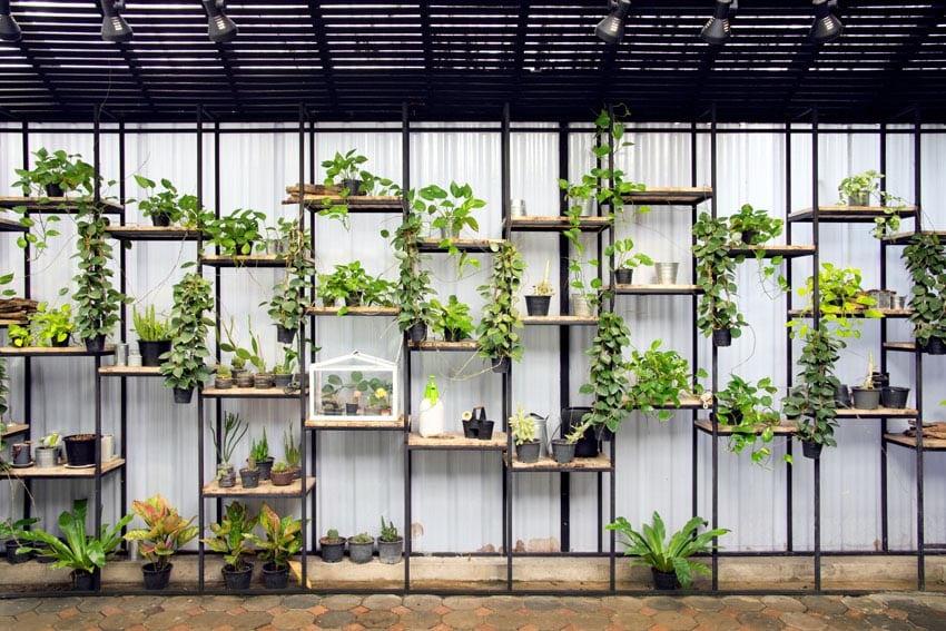 Vertical herb garden on shelves