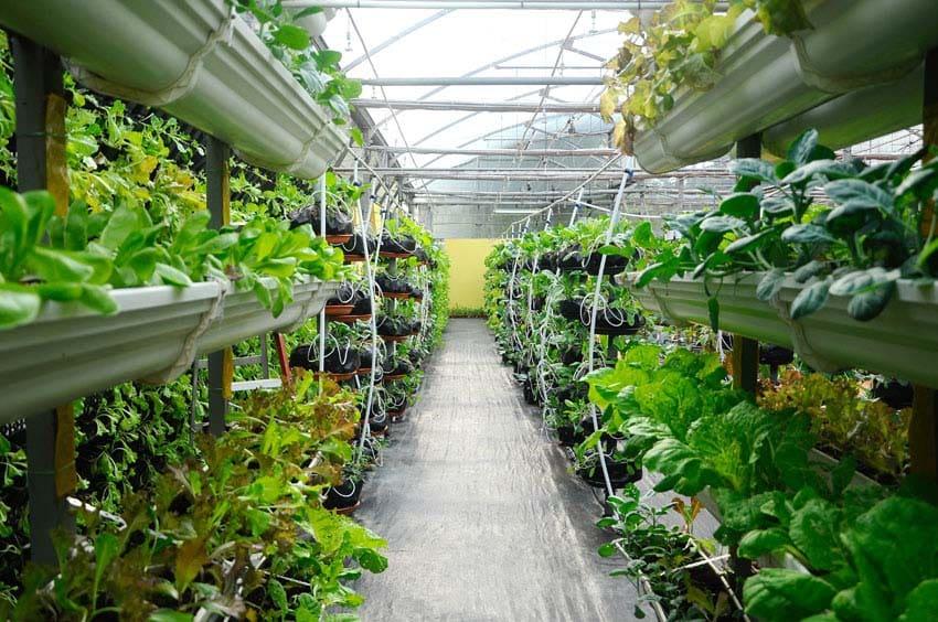 55 best vertical garden ideas planters diy kits for Vertical vegetable garden