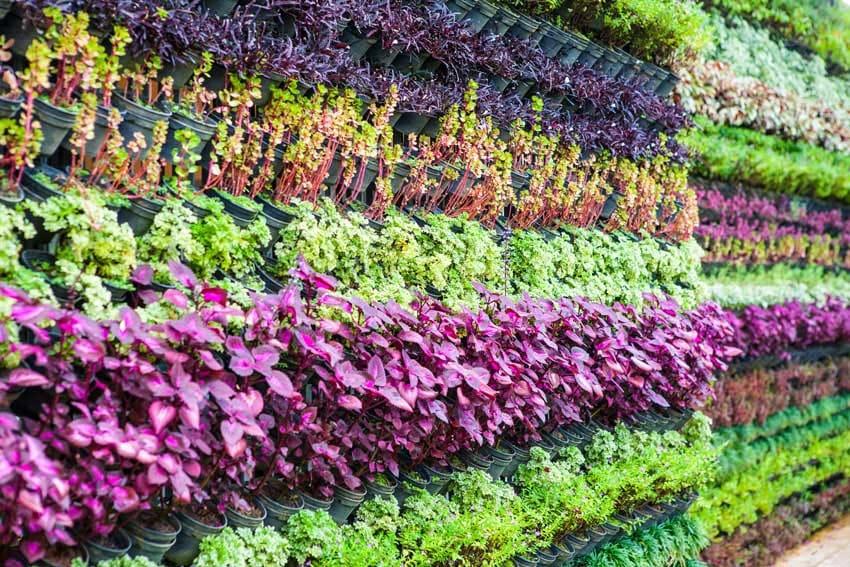 Wall of flowering plants