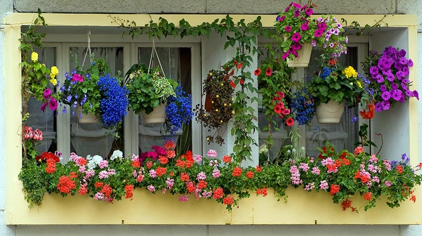 Window flower box with hanging plants