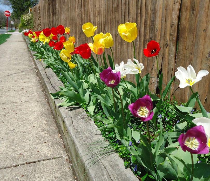 Wood flower box along fence