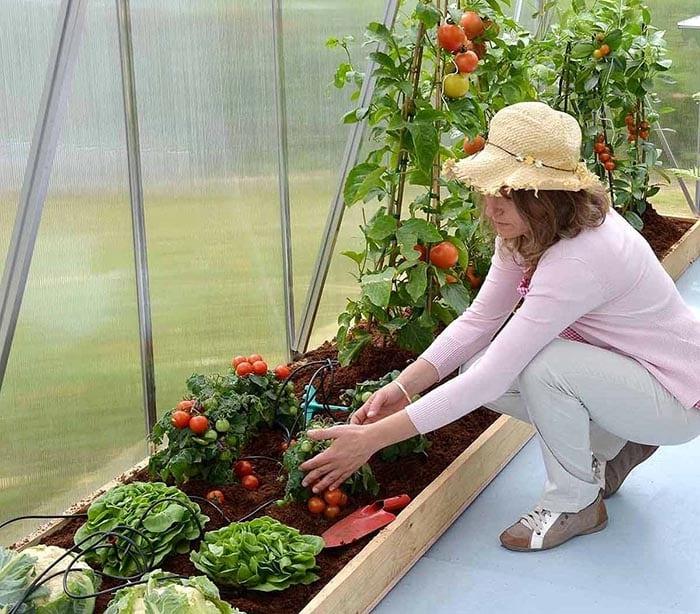 Greenhouse water sprayer