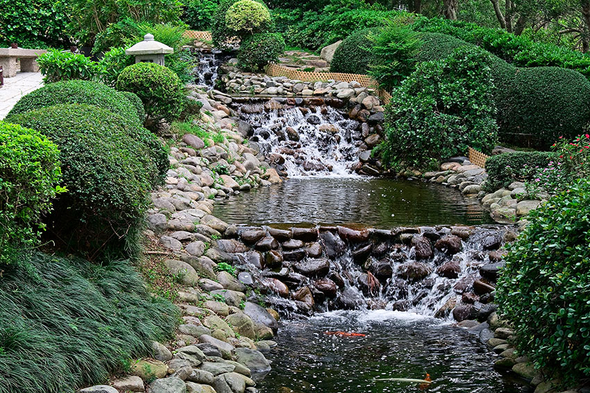 Waterfall and pond with goldfish in japanese garden