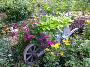 Wheelbarrow Planter Ideas (Garden & Yard Pictures)
