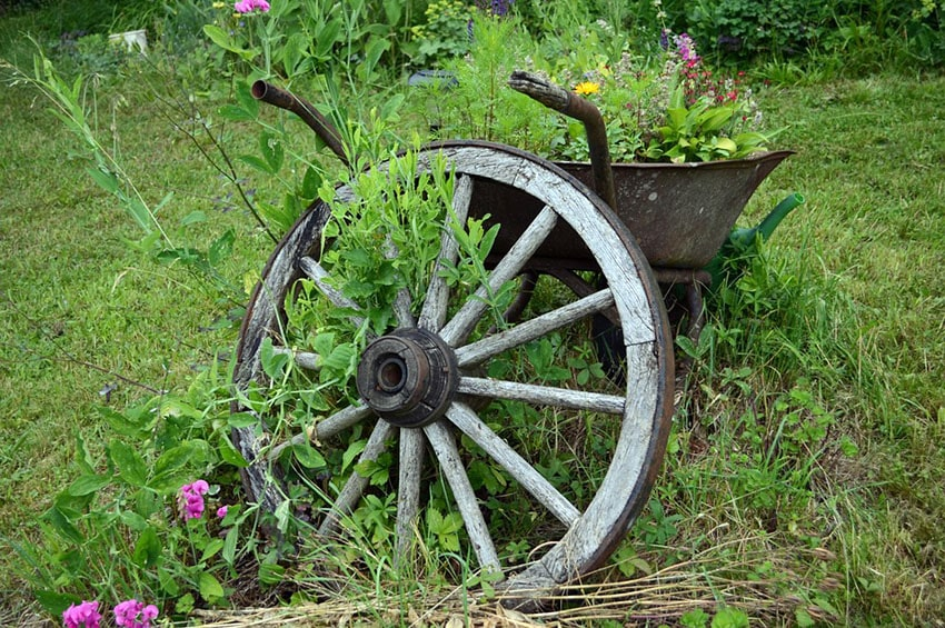 Old Wheelbarrow Garden Planter Rusty With Flowers And Rustic Wagon Wheel