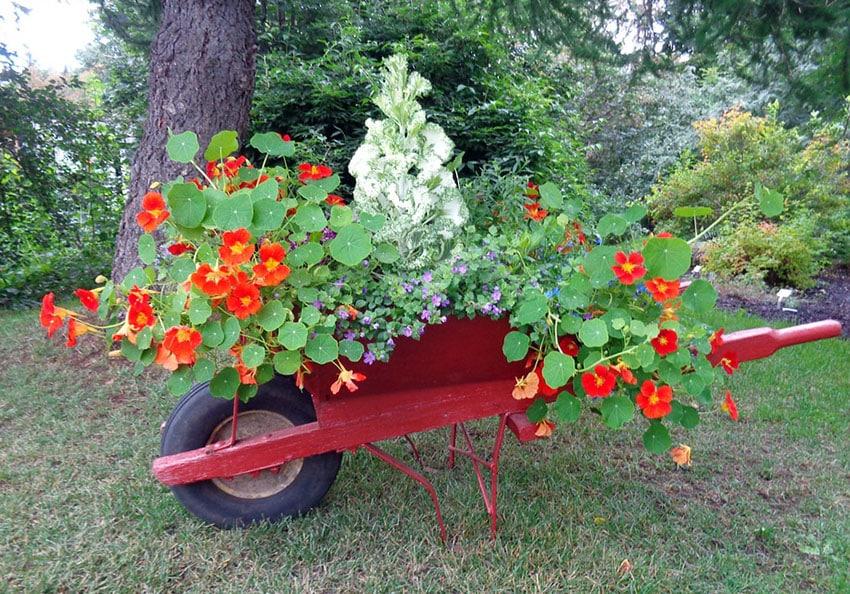 Red wheelbarrow flower cart