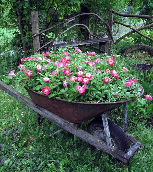 Wheelbarrow planter with pink flowers