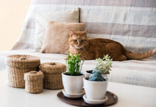House Plants Safe For Cats Cat Friendly Indoor Plants