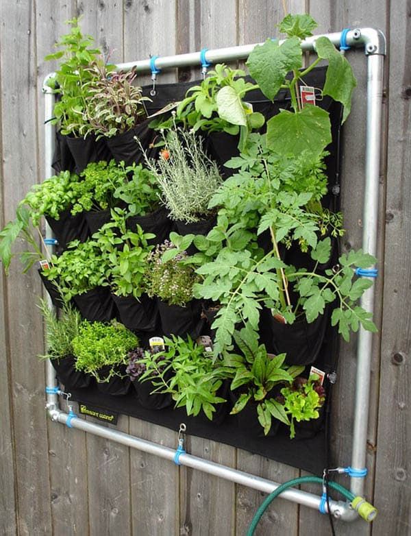 Fence hanging herb garden