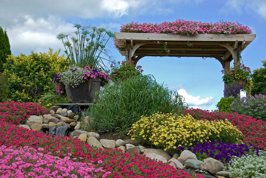 Garden pergola with cascading pink flowers