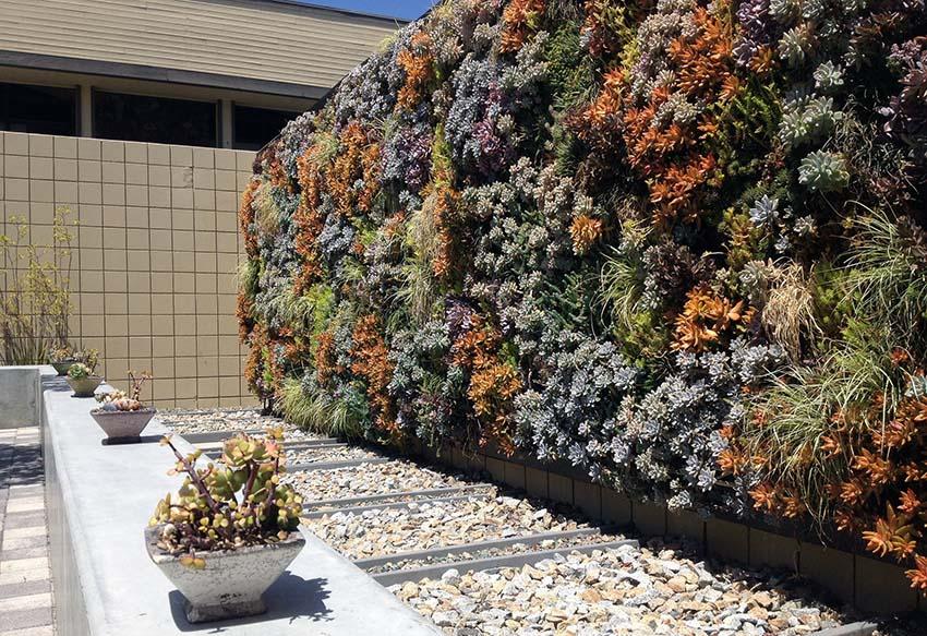 Vertical succulent garden wall