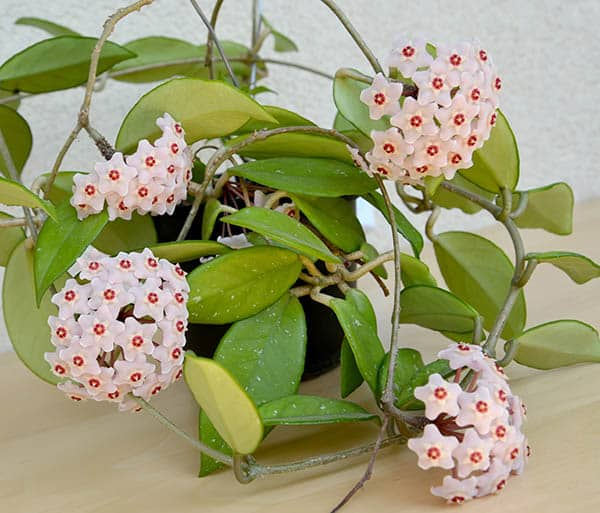 House Plants Safe For Cats Cat Friendly Indoor Plants Designing Idea