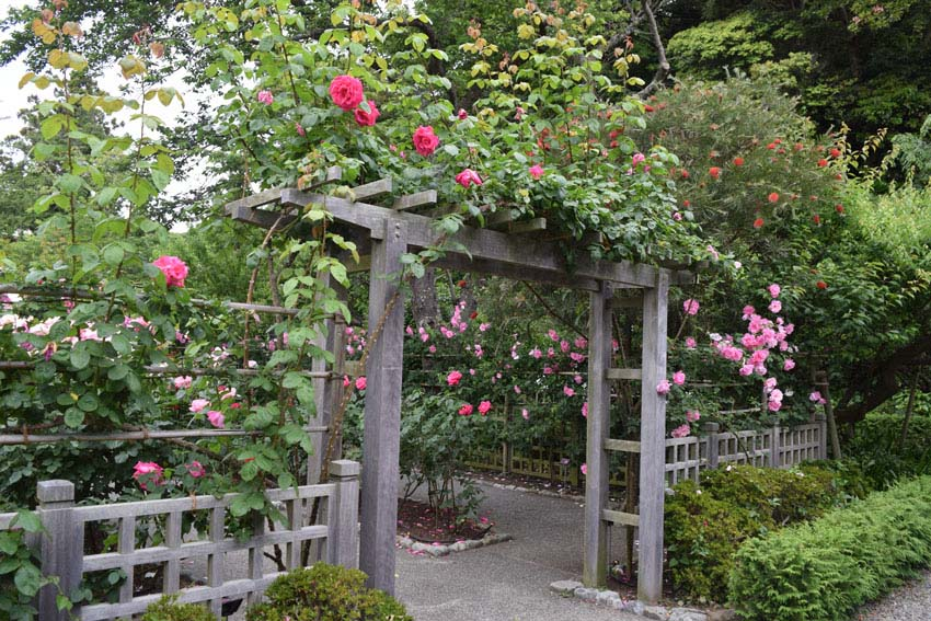 Wood arbor with roses