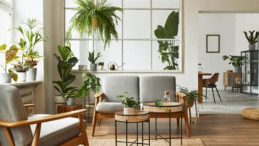 Living room with indoor plants that remove air pollution