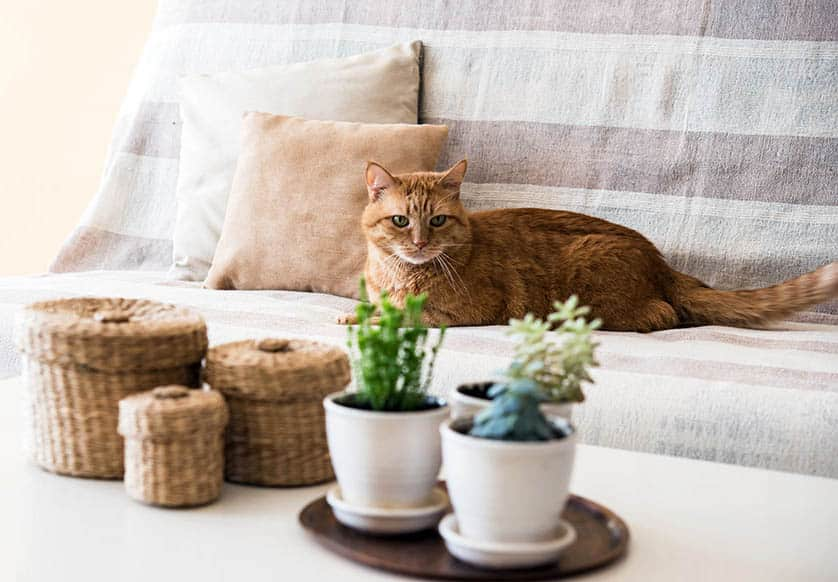 Cat on couch next to house plants on coffee table