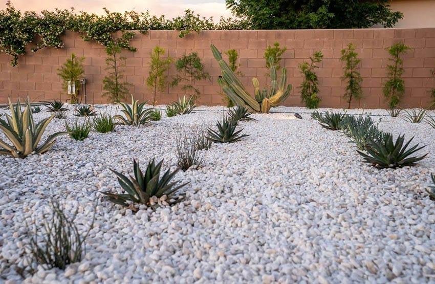 Gravel Backyard With Desert Plants