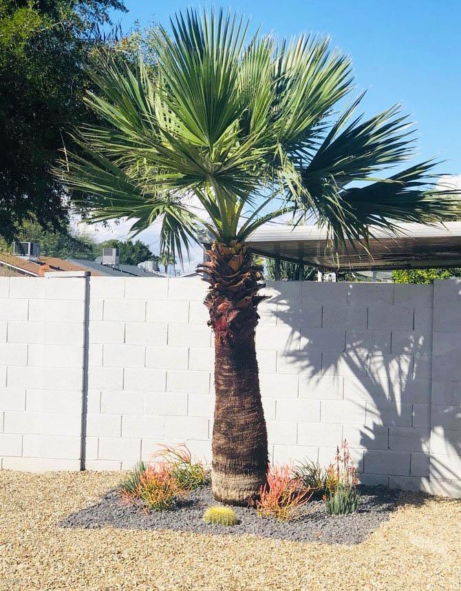 Gravel design around palm tree