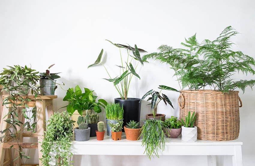 Assortment of indoor potted houseplants