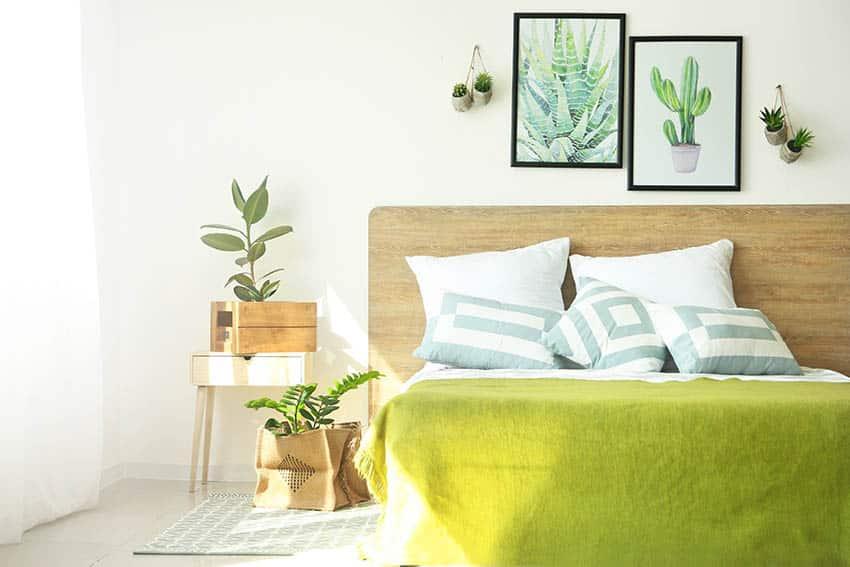 Bedroom with direct sun and indoor houseplants