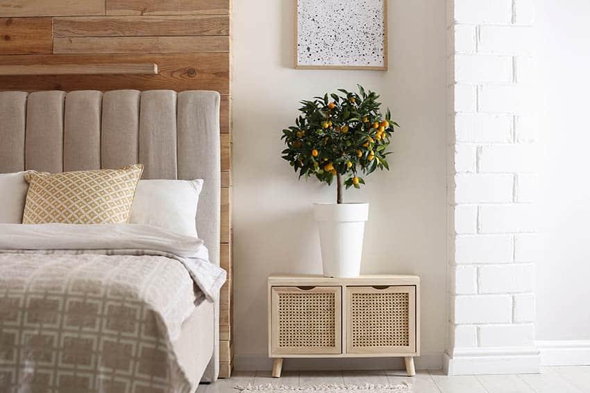 Bedroom with indoor citrus tree