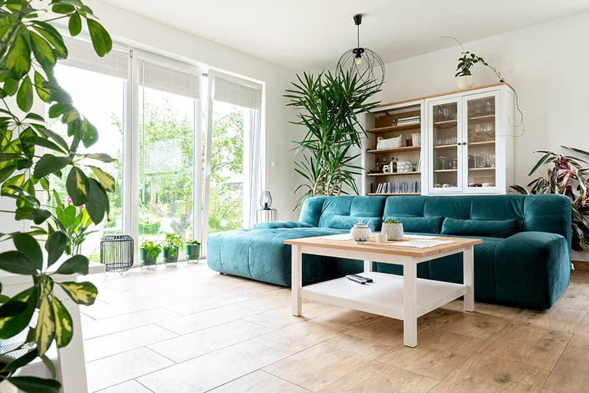 Contemporary living room with direct sun houseplants
