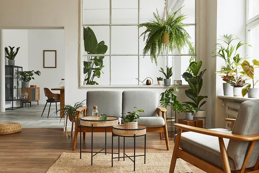 Living room with bright window indoor plants