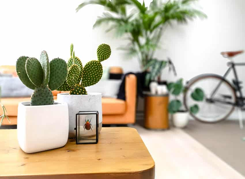 Living room with small potted indoor cactus on coffee table