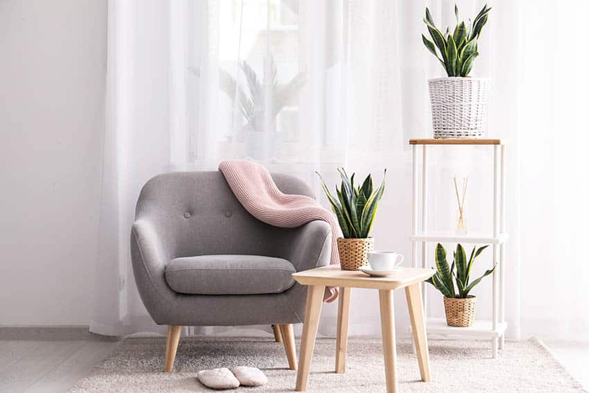 Living room with snake plants and armchair