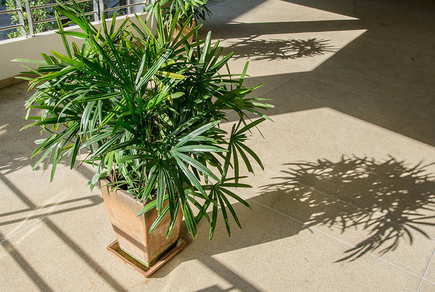 Patio with potted bamboo palm tree