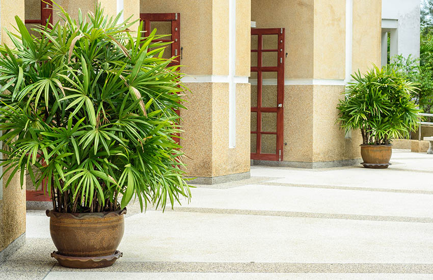 Patio with potted lady palm