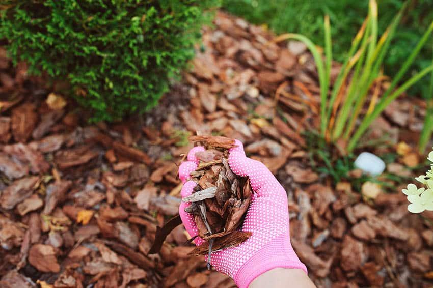 Pine bark wood chip mulch